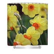 Dallas Daffodils 01 Shower Curtain