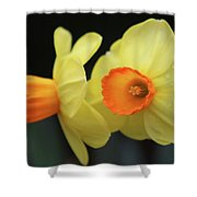 Dallas Daffodils 07 Shower Curtain