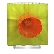 Dallas Daffodils 40 Shower Curtain