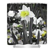 Dallas Daffodils 54 Shower Curtain