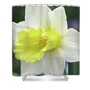 Dallas Daffodils 55 Shower Curtain