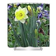 Dallas Daffodils 63 Shower Curtain