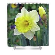 Dallas Daffodils 64 Shower Curtain