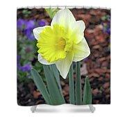 Dallas Daffodils 71 Shower Curtain