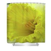 Dallas Daffodils 73 Shower Curtain