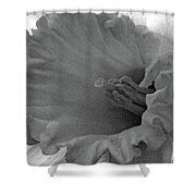 Dallas Daffodils 74 Shower Curtain