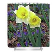 Dallas Daffodils 78 Shower Curtain