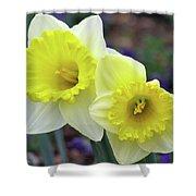 Dallas Daffodils 79 Shower Curtain