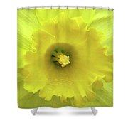 Dallas Daffodils 87 Shower Curtain