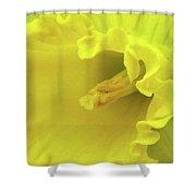Dallas Daffodils 91 Shower Curtain