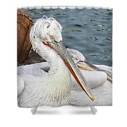 Dalmatian Pelican #3 Shower Curtain