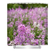 Dame's Rocket Wildflowers And Oak Tree Shower Curtain