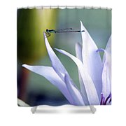 Damsel Daintiness Shower Curtain