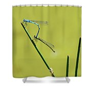 Damselflies Shower Curtain