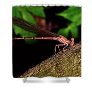 Damselfly 006 Shower Curtain