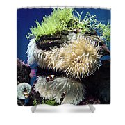 Dance Of The Anemones Shower Curtain