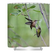 Dance Of The Calliopes Shower Curtain