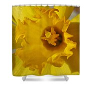 Dance Of The Daffodil Shower Curtain