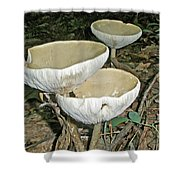 Dance Of The Mushrooms Shower Curtain