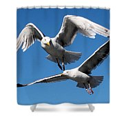 Aerial Dance Of The Seagulls Shower Curtain