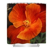 Dances Of Light Shower Curtain