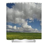 Dances With Mustard Shower Curtain