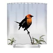 Dancing Blackbird Shower Curtain