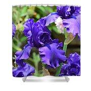 Dancing Blue Irises Shower Curtain