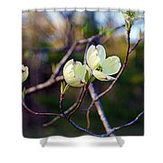 Dancing Dogwood Blooms Shower Curtain
