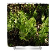 Dancing Ferns Shower Curtain