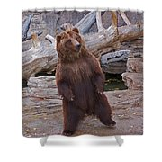 Dancing Grizzly Shower Curtain