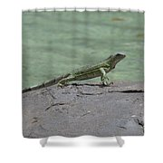 Dancing Iguana On Rocks Along The Water's Edge Shower Curtain