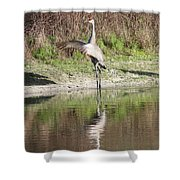 Dancing On The Pond Shower Curtain