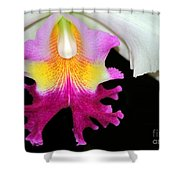 Dancing Orchid Shower Curtain