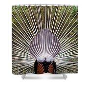 Dancing Peacock, Kanha National Park Shower Curtain