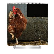 Dancing Rooster Shower Curtain