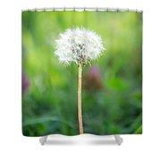 Dandalion Shower Curtain