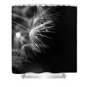 Dandelion 2 Bw Shower Curtain