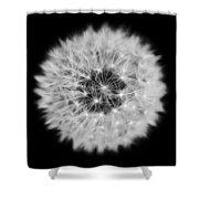 Dandelion 3 V2 Shower Curtain