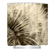 Dandelion 8 Shower Curtain