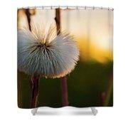 Dandelion At Sunset Shower Curtain