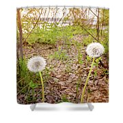 Dandelion Close To The River Shower Curtain