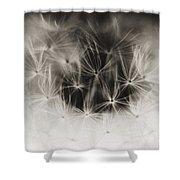 Dandelion Close-up Shower Curtain