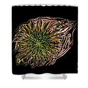 Dandelion Eye  Shower Curtain