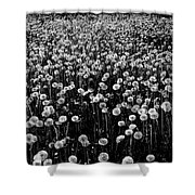 Dandelion Field In Black And White Shower Curtain