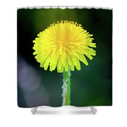 Dandelion Flower Shower Curtain