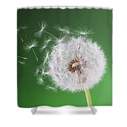 Dandelion Flying On Background Green Shower Curtain