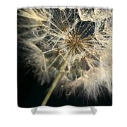 Dandelion Forty One Shower Curtain