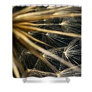 Dandelion Forty Three Shower Curtain