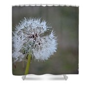 Dandelion Frost Shower Curtain